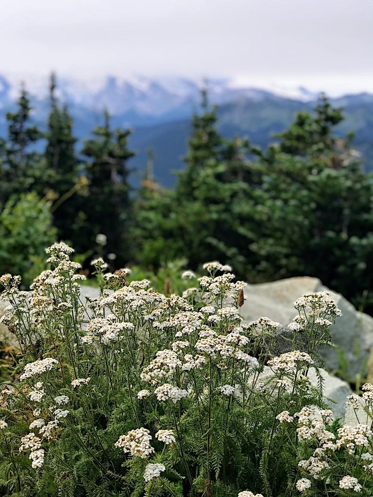 Family Trip to Seattle - Crystal Mountain Summit