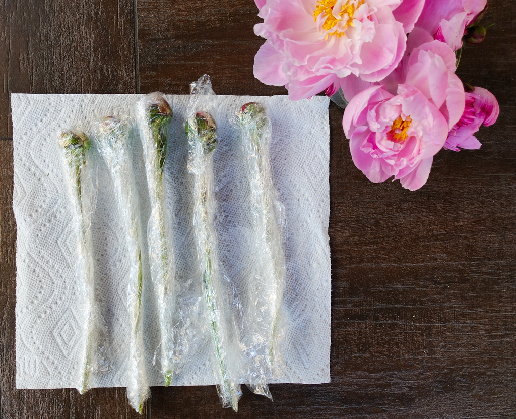 How to Store Peony Flowers For Weeks
