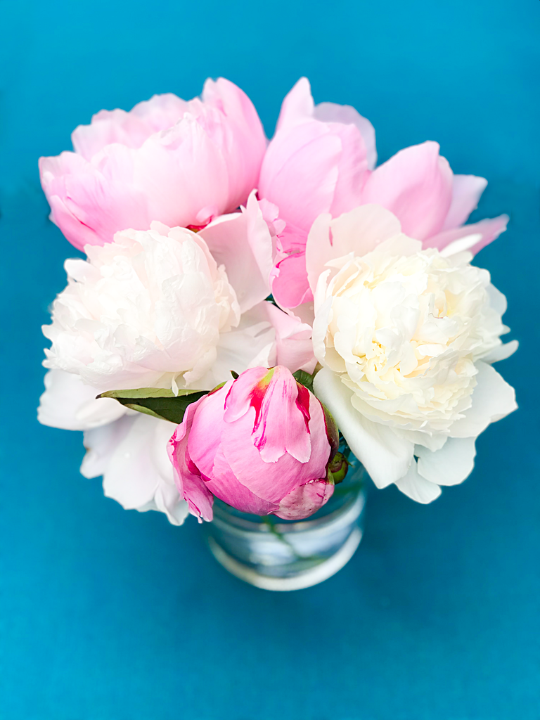 How to Get Ants Off of Peonies and Store Peony Flowers