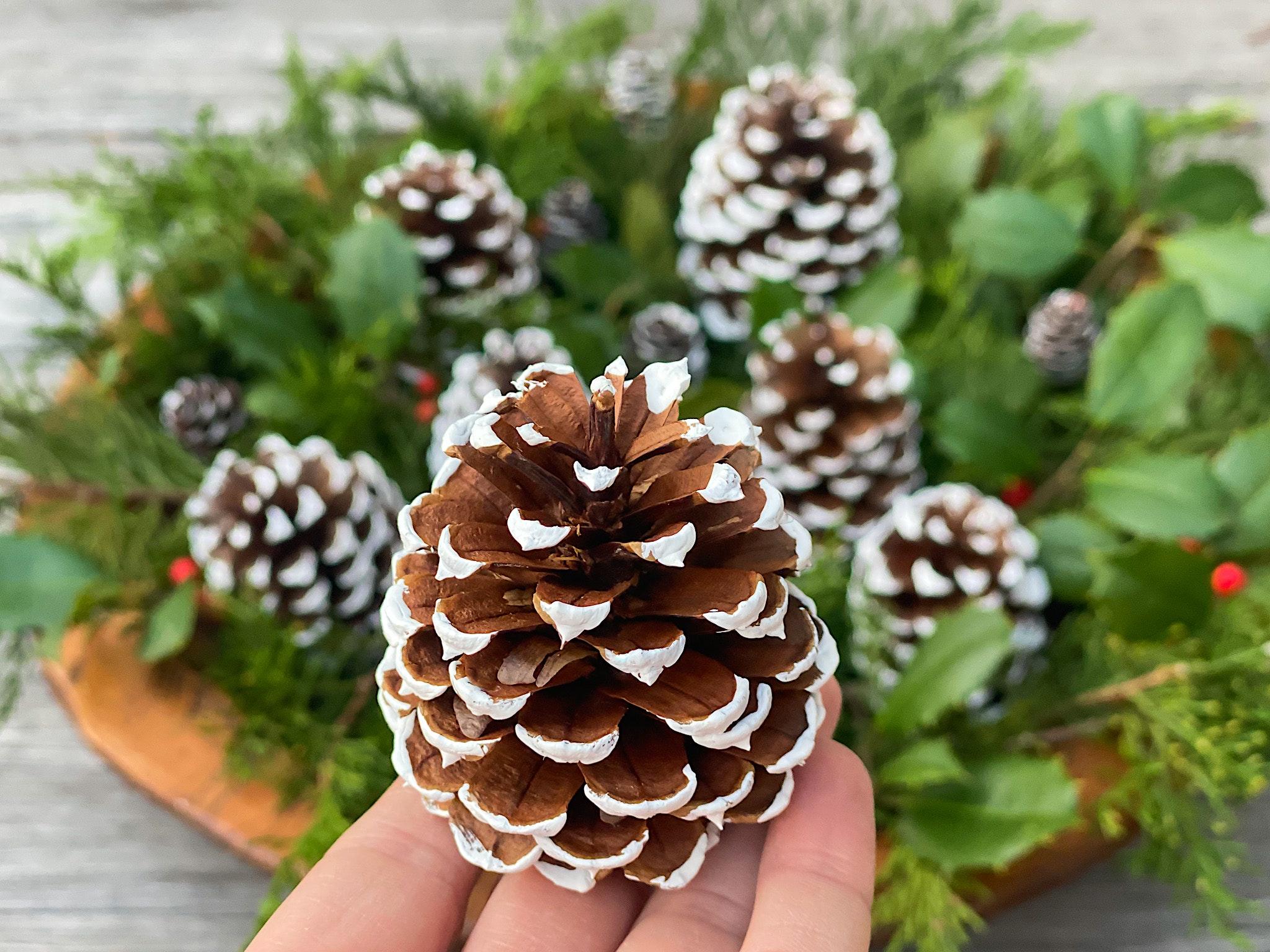 how to paint pinecones