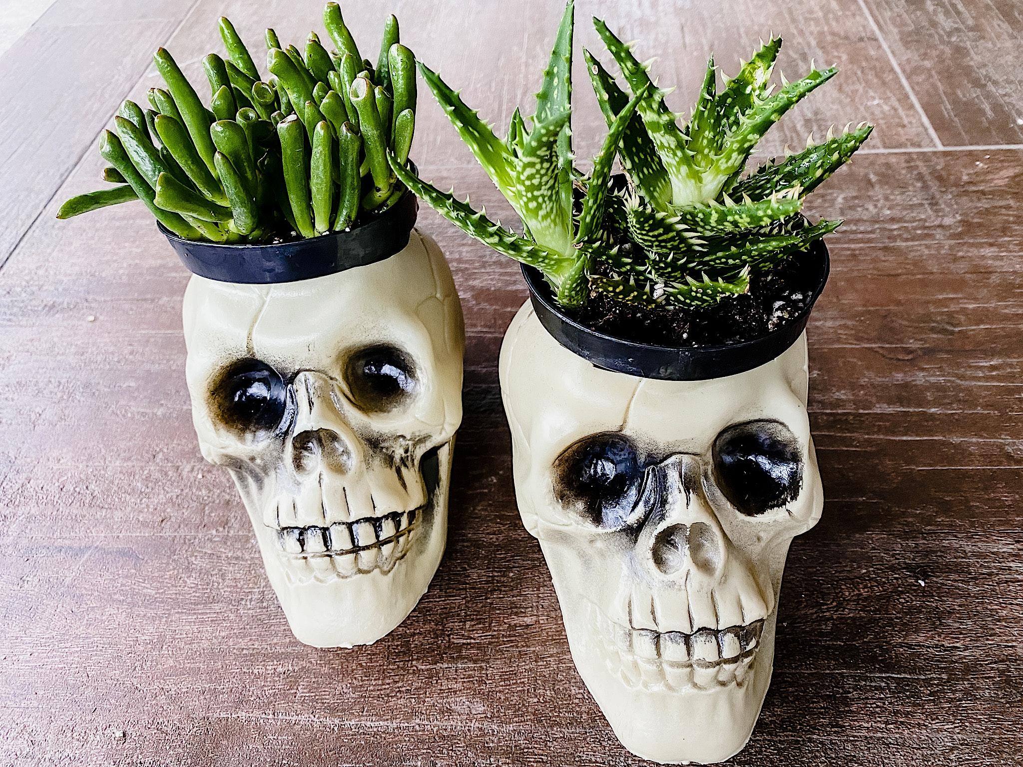 skeleton planters